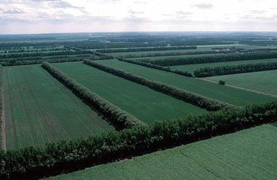 Правительство приняло постановление о сохранении полезащитных лесных полос