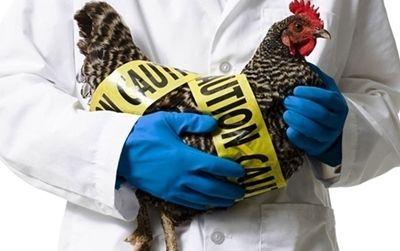 В Николаевской области снят карантин в населённых пунктах, где были зафиксированы случаи птичьего гриппа
