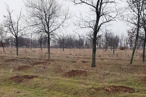 Убирать парк «Дружба» будет ФЛП, созданный 4 месяца назад бывшим подчиненным Коренева - ДЖКХ ему заплатит 3,3 миллиона
