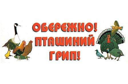 Грип птиці в селі Великосербулівка